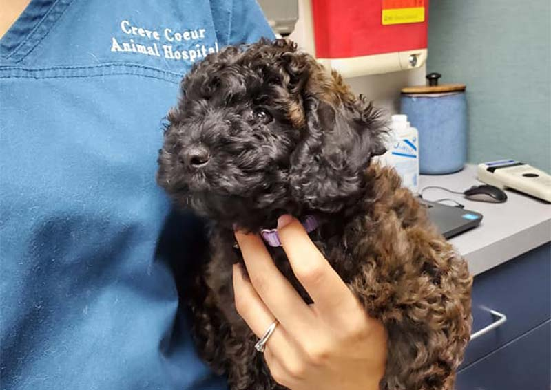Dog Veterinary Care, Creve Coeur
